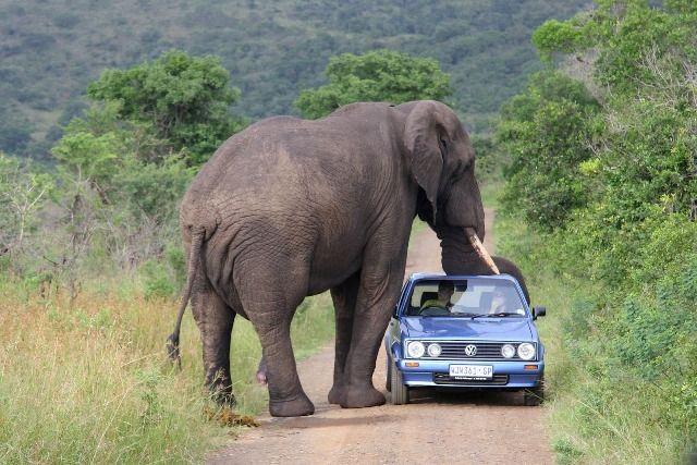 عجیبترین و جالبترین حقایق در مورد فیلها که نمیدانستید+ تصاویر
