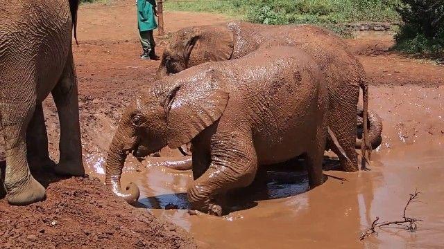 18 حقیقت بسیار جالب در مورد فیل ها