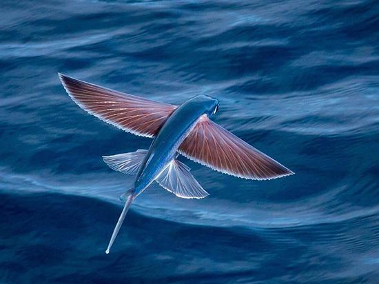 می دانستید ماهی ها هم پرواز می کنند؟