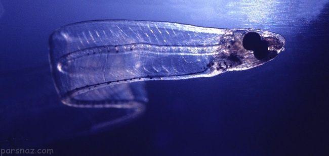 عجیب ترین موجودات جهان که باور نکردنی هستند