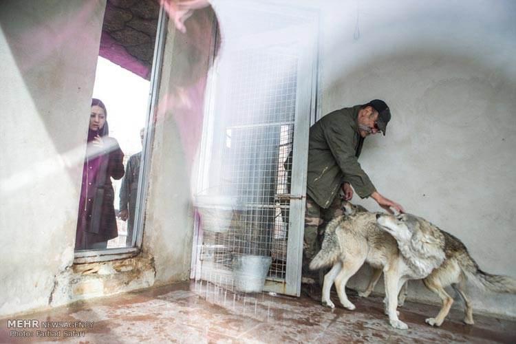 عکس های خانه پیرمرد مکانی برای زندگی حیوانات