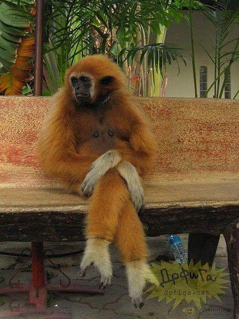 طرز نشستن خنده دار برخی حیوانات