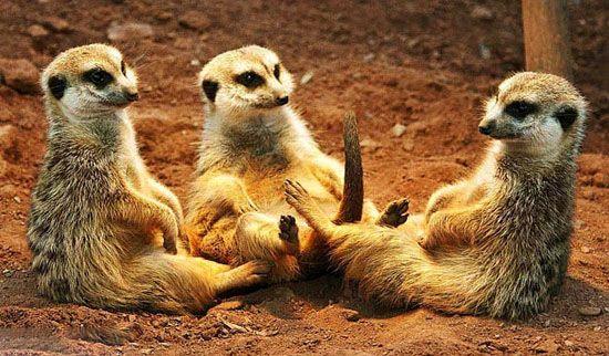 عکس های خنده دار طرز نشستن حیوانات