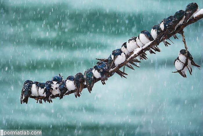 تصاویر پرندگان در فصل سرما