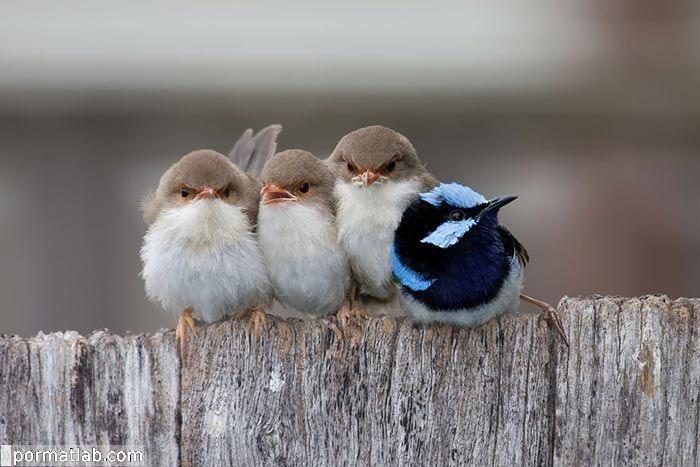 پرندگان در فصل سرما