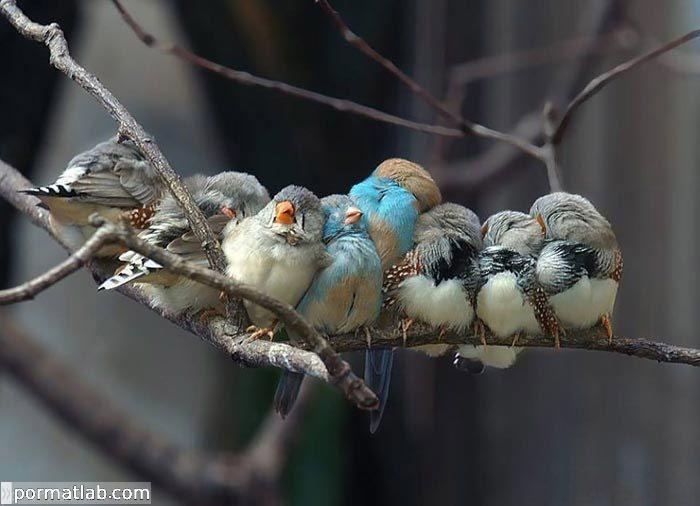 تصاویر پرندگان در فصل سرما و حالات جالب آنها