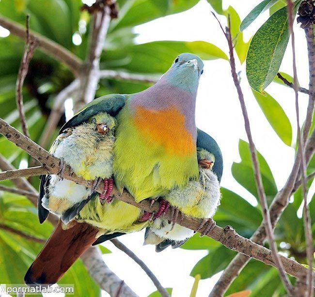 نقش خانواده در حیوانات