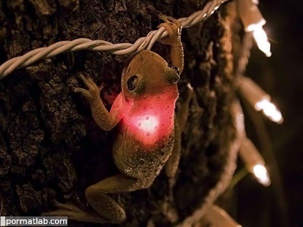 عکس های بامزه و خنده دار از دنیای قورباغه ها