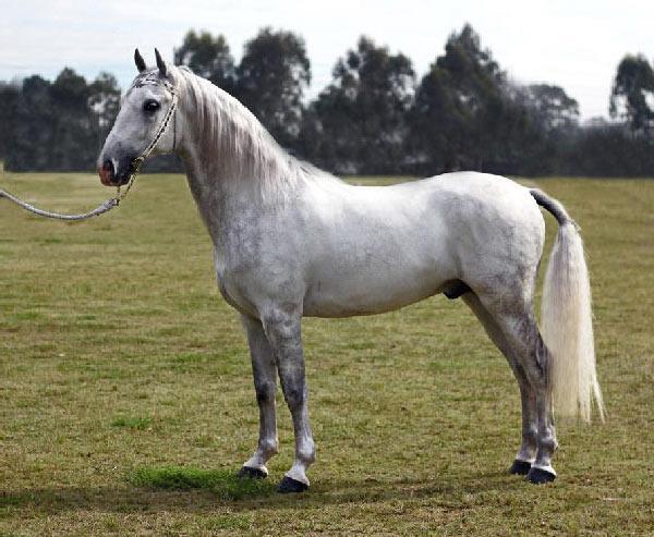 یابو با اسب چه تفاوتی دارند؟