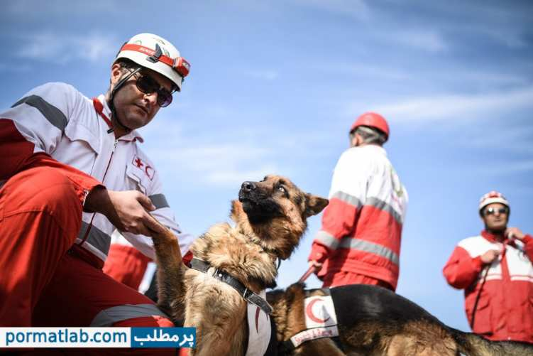 مانور امداد و نجات سگ های تجسس