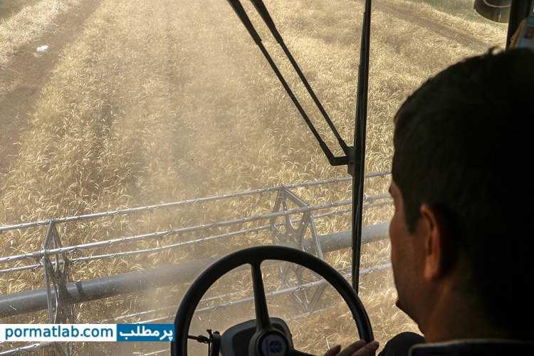 برداشت گندم در شهرستان ری - پرمطلب