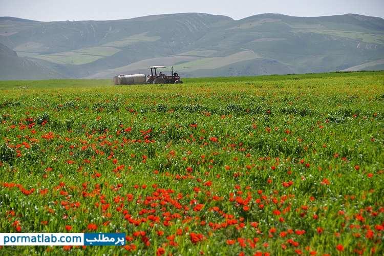 هوای بهارِی در خراسان شمالی - پرمطلب