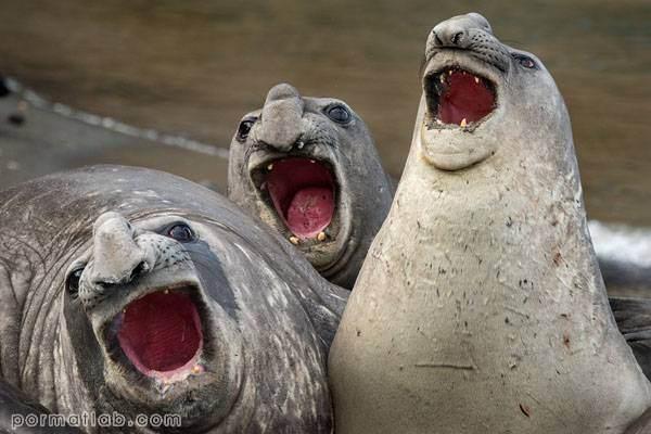 تصاویری از حیات وحش که شما را به خنده میاندازد