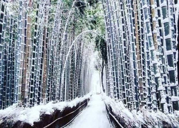 کیوتو در فصل زمستان
