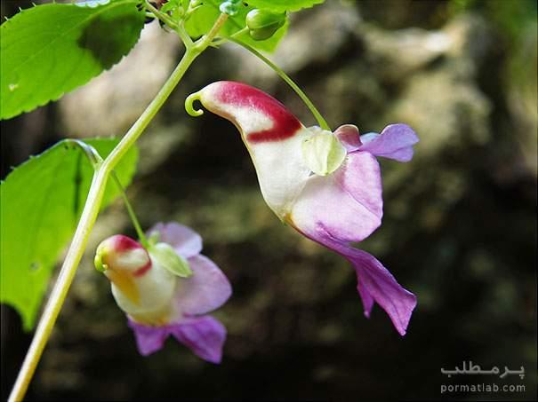 شباهت بسیار عجیب گلها به موجودات زنده